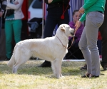 2013-05-05-lt-retriever-club-show-img_2450
