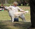2013-05-05-lt-retriever-club-show-img_2453
