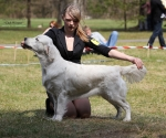 2013-05-05-lt-retriever-club-show-img_2458