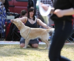 2013-05-05-lt-retriever-club-show-img_2469