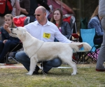 2013-05-05-lt-retriever-club-show-img_2478