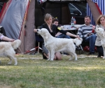 2013-05-05-lt-retriever-club-show-img_2484