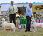 2013-05-05-lt-retriever-club-show-img_2497