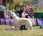 2013-05-05-lt-retriever-club-show-img_2512
