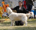 2013-05-05-lt-retriever-club-show-img_2517