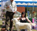 2013-05-05-lt-retriever-club-show-img_2549