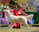2013-05-05-lt-retriever-club-show-img_2554