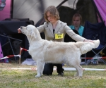 2013-05-05-lt-retriever-club-show-img_2563