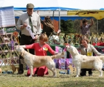 2013-05-05-lt-retriever-club-show-img_2579