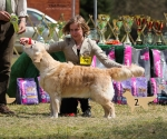 2013-05-05-lt-retriever-club-show-img_2592
