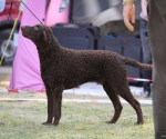 2013-05-05-lt-retriever-club-show-img_2612