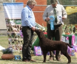 2013-05-05-lt-retriever-club-show-img_2617