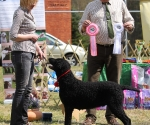 2013-05-05-lt-retriever-club-show-img_2625