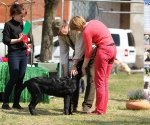 2013-05-05-lt-retriever-club-show-img_2640