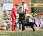 2013-05-05-lt-retriever-club-show-img_2655