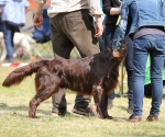 2013-05-05-lt-retriever-club-show-img_2666