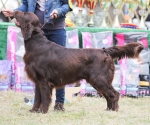 2013-05-05-lt-retriever-club-show-img_2671