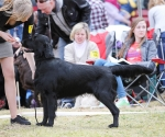 2013-05-05-lt-retriever-club-show-img_2687