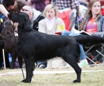 2013-05-05-lt-retriever-club-show-img_2690