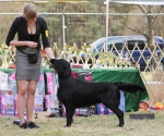 2013-05-05-lt-retriever-club-show-img_2701