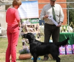 2013-05-05-lt-retriever-club-show-img_2703