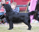 2013-05-05-lt-retriever-club-show-img_2715