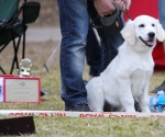2013-05-05-lt-retriever-club-show-img_2734