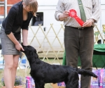2013-05-05-lt-retriever-club-show-img_2742
