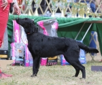 2013-05-05-lt-retriever-club-show-img_2747