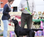 2013-05-05-lt-retriever-club-show-img_2754