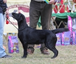 2013-05-05-lt-retriever-club-show-img_2758
