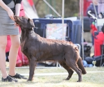 2013-05-05-lt-retriever-club-show-img_2775