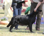 2013-05-05-lt-retriever-club-show-img_2782