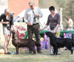 2013-05-05-lt-retriever-club-show-img_2788