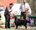 2013-05-05-lt-retriever-club-show-img_2820