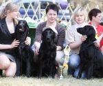 2013-05-05-lt-retriever-club-show-img_2841