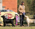 2013-05-05-lt-retriever-club-show-img_2990
