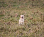 retriever_field_trials_2012_10_27_img_1148