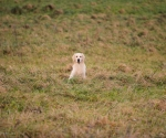 retriever_field_trials_2012_10_27_img_1197