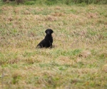 retriever_field_trials_2012_10_27_img_1203