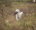 retriever_field_trials_2012_10_27_img_1209