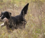 retriever_field_trials_2012_10_27_img_1213
