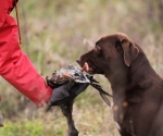 retriever_field_trials_2012_10_27_img_1228