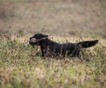 retriever_field_trials_2012_10_27_img_1278