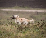 retriever_field_trials_2012_10_27_img_1297