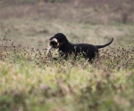 retriever_field_trials_2012_10_27_img_1314