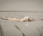 retriever_field_trials_2012_10_27_img_1361