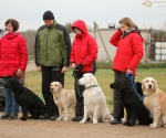 retriever_field_trials_2012_10_27_img_1439