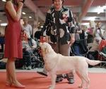 """KANGA GORSKA FANTAZJA – atvira klasė, puikiai – 1 vieta klasėje (klasėje 40 šunų), veislynas """"Okeanas"""""""