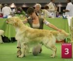worlddogshowchampionnatdefrance_2011_img_8482